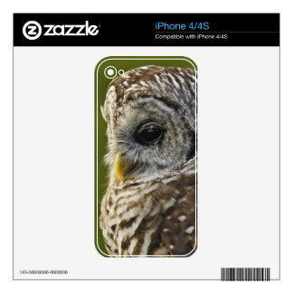Barred Owl, Strix varia, Michigan Skins For The iPhone 4S