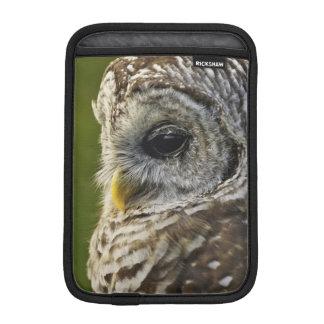 Barred Owl, Strix varia, Michigan Sleeve For iPad Mini