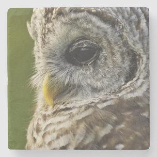 Barred Owl, Strix varia, Michigan Stone Coaster