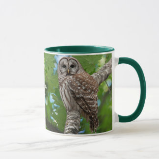 Barred Owl  Strix varia Mug