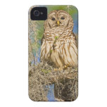 Barred Owl (Strix varia) perched in cypress tree Case-Mate iPhone 4 Cases