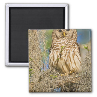 Barred Owl (Strix varia) perched in cypress tree Magnet
