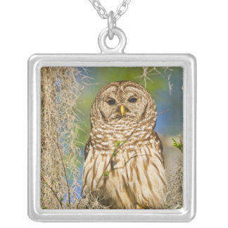 Barred Owl (Strix varia) perched in cypress tree Custom Necklace