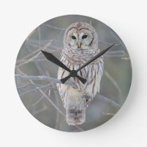 Barred Owl Strix Varia Round Clock