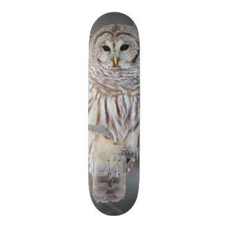 Barred Owl Strix Varia Skateboard