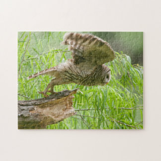 Barred Owl Taking Flight Wildlife Puzzle