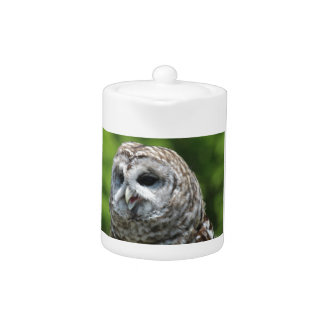 Barred Owl Teapot