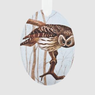 Barred Owl Vintage Wildlife Illustration