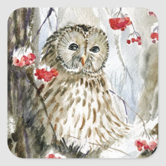 Barred Owl watercolor painting Square Sticker