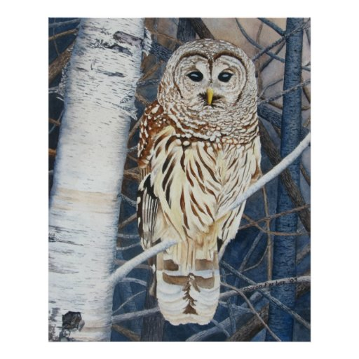 Barred Owl Watercolor Poster