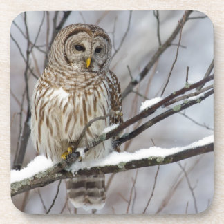 Barred Owl with a light snowfall Drink Coasters