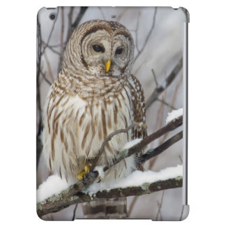 Barred Owl with a light snowfall Cover For iPad Air