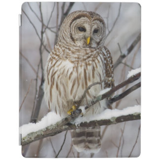 Barred Owl with a light snowfall iPad Smart Cover