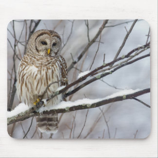 Barred Owl with a light snowfall Mouse Pad