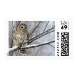 Barred Owl with a light snowfall Postage
