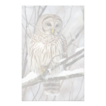 Barred Owl with a light snowfall Stationery