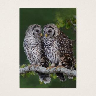 Barred Owls Birder's Wildlife Business Card