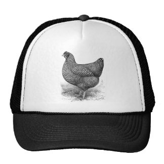barred plymouth rock hen mesh hats