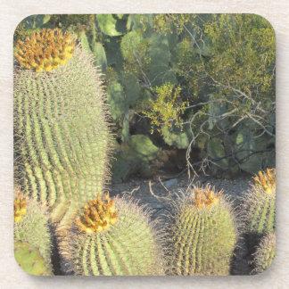 Barrel Cacti Coasters