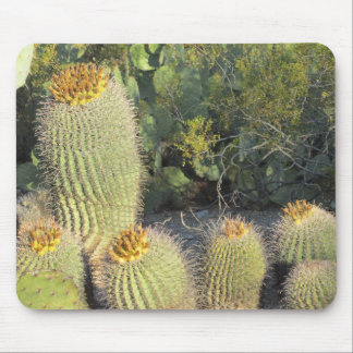 Barrel Cacti Mouse Pad