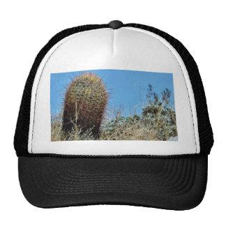 Barrel Cactus A Cactus In Anza Borrego Desert Cact Mesh Hats
