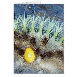 Barrel Cactus Blossom Greeting Card