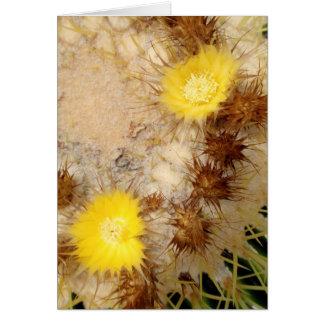Barrel Cactus Blossoms Card