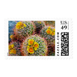 Barrel cactus close up, California Postage