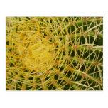 Barrel Cactus Closeup Nature Design Postcards