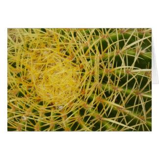 Barrel Cactus Closeup Nature Pattern Photo Card