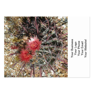 Barrel Cactus Fishhook Red Large Business Card