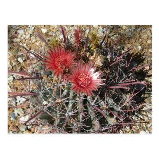 Barrel Cactus Fishhook Red Postcard