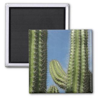 Barrel Cactus I 2 Inch Square Magnet