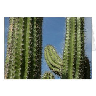Barrel Cactus I Desert Nature Photo Card