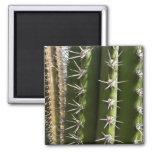 Barrel Cactus II 2 Inch Square Magnet