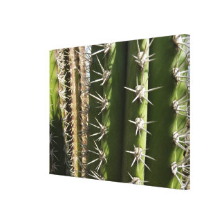Barrel Cactus II Canvas Print