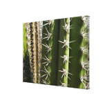 Barrel Cactus II Desert Nature Photo Canvas Print