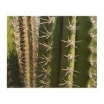 Barrel Cactus II Desert Nature Photo Wood Print