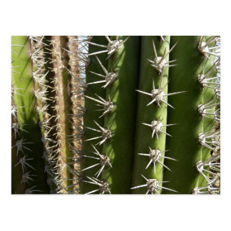 Barrel Cactus II Postcard