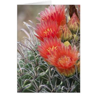 Barrel Cactus in bloom Greeting Card