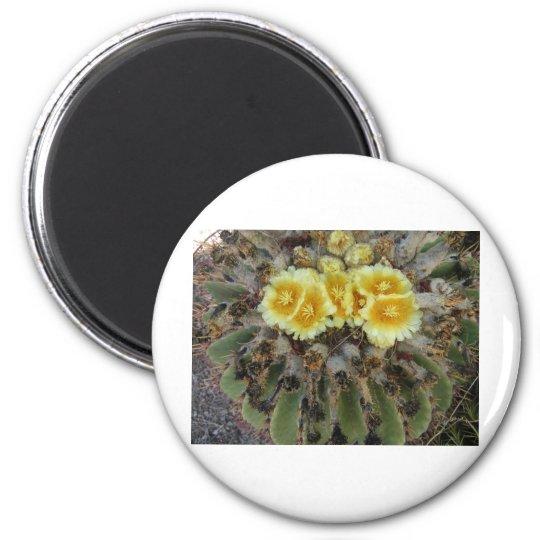 Barrel Cactus in Bloom Magnet