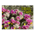 Barrel cactus in bloom, Sonoran Desert, Arizona Postcard