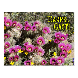 Barrel cactus in bloom, Sonoran Desert, Arizona Postcard