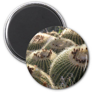Barrel Cactus in Early Morning Light 2 Inch Round Magnet