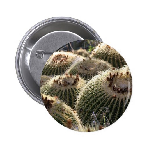Barrel Cactus in Early Morning Light Pinback Button