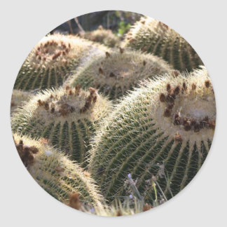 Barrel Cactus in Early Morning Light Classic Round Sticker