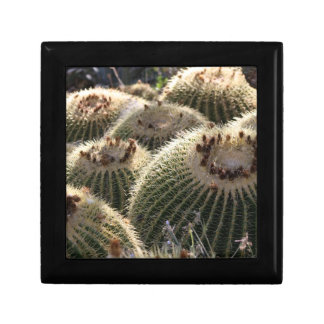 Barrel Cactus in Early Morning Light Gift Box