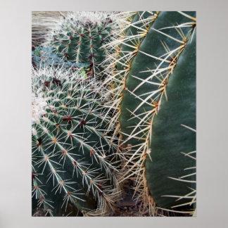 Barrel Cactus Photo Mexico Southwest Cacti Poster