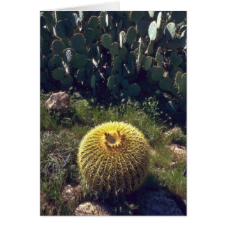 Barrel Cactus With Brothers Cards
