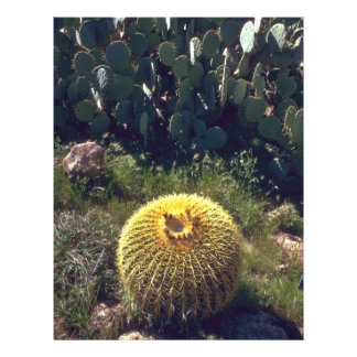 Barrel Cactus With Brothers Flyer
